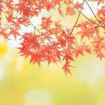 京都嵐山の紅葉名所スポット!絶対に行っておきたいおすすめ8選!