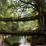 必見!美しくも奇妙な世界の珍しい橋まとめ6選一挙公開!