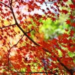 箱根の紅葉2014年の見頃時期とおすすめスポット情報!