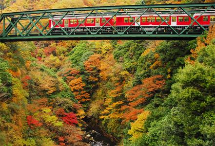 kouyou ha02 箱根の紅葉2014年の見頃時期とおすすめスポット情報!