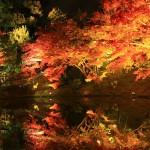 京都高台寺の紅葉ライトアップの期間は?混雑を避けるおすすめ情報!