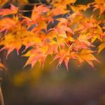 鎌倉の紅葉の時期は?おすすめのスポットとコース情報!