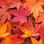 京都の紅葉、名所ライトアップの時期は?おすすめコース情報も!