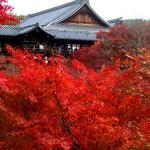京都東福寺の紅葉の見ごろ時期は?ライトアップとおすすめコース情報!