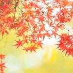 日光の紅葉!見ごろ時期とおすすめコース情報!ポイントを押さえて日光の紅葉を満喫!