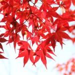 高尾山の紅葉、見ごろ時期とおすすめハイキングコース情報!