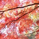 東京の紅葉名所特集!おすすめの紅葉スポット厳選7選!