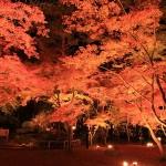 関東の紅葉の名所でライトアップが楽しめるオススメの穴場スポット8選!