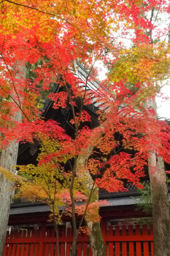 kyoto ichi01 京都一乗寺の紅葉!おすすめスポットと人気カフェ4選!