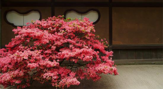 kyoto ichi04 京都一乗寺の紅葉!おすすめスポットと人気カフェ4選!