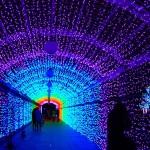 関西・大阪で人気のクリスマスイルミネーションおすすめ7選!