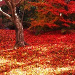 京都嵐山、穴場の紅葉へ。奥嵯峨の紅葉とおすすめレストラン!