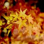 古都京都の紅葉を求めて。南禅寺から穴場の石塀小路を歩く写真の旅。