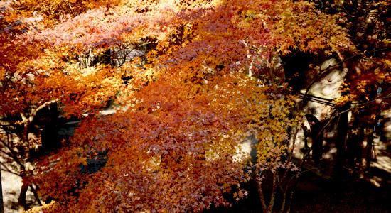 kyoto_na05