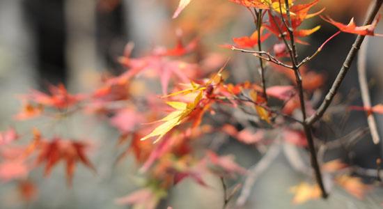 kyoto_na23