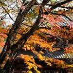 滋賀・琵琶湖の東近江エリアで紅葉ハシゴ!おすすめカフェ情報も!