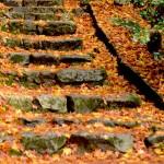 赤山禅院~曼殊院門跡~圓光寺~丈山寺の紅葉を巡る写真旅