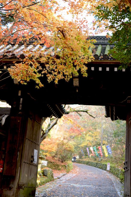 kyoto_ichi01