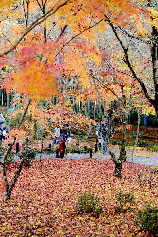 kyoto_ichi08