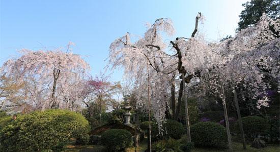 arashiyama_sa02