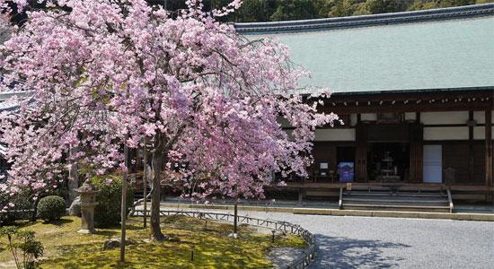 arashiyama_sa04