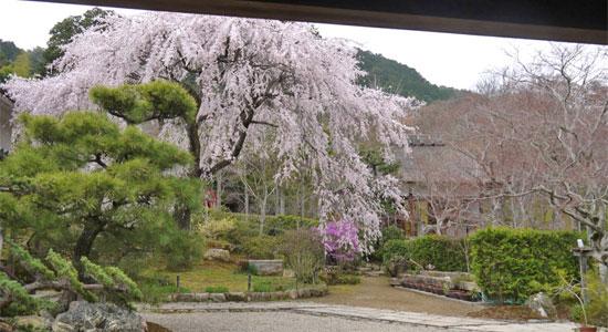 arashiyama_sa05