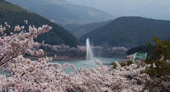 kyusyu sa02 九州の桜の名所おすすめ7選とグルメ&温泉情報!