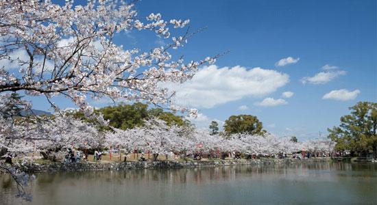 kyusyu sa05 九州の桜の名所おすすめ7選とグルメ&温泉情報!