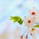奈良の桜の名所7選とおすすめグルメ情報!プチ旅行にも最適!