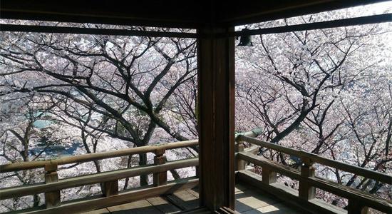 shiga_sa04