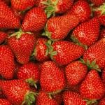 静岡で予約なしでもイチゴ狩りが楽しめるオススメ農園7選!