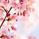 東京で外せない桜の名所おすすめ7選!ライトアップの情報も!