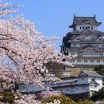 姫路城の桜の見ごろとおすすめカフェ&レストラン5選!