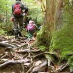関西のハイキングで初心者にもおすすめのコース7選!