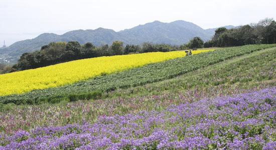 kansai is01 関西から日帰り旅行で行けるおすすめ離島5選とカフェ情報!