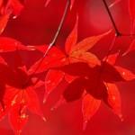 奈良の紅葉が楽しめるおすすめの観光名所7選!