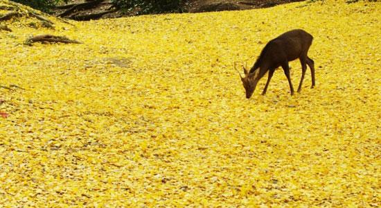 nara ko01 奈良の紅葉が楽しめるおすすめの観光名所7選!