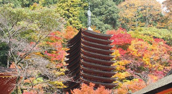 nara ko04 奈良の紅葉が楽しめるおすすめの観光名所7選!