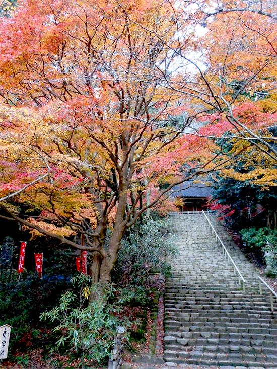 nara ko051 奈良の紅葉が楽しめるおすすめの観光名所7選!
