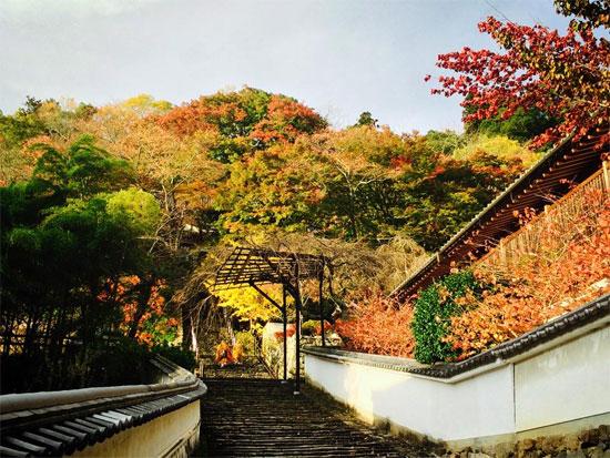 nara ko06 奈良の紅葉が楽しめるおすすめの観光名所7選!
