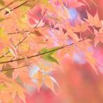 関東で紅葉と日帰り温泉が楽しめるおすすめスポット7選!