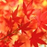 京都紅葉の穴場、おすすめの隠れスポット15選!