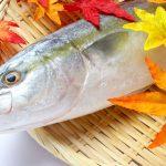 ふるさと納税で人気の魚やカニがもらえるおすすめ自治体9選!