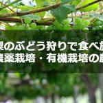 山梨のぶどう狩りで食べ放題・減農薬栽培・有機栽培の農園6選!