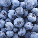 千葉のブルーベリー狩りで食べ放題できるおすすめ農園7選!無農薬やエコ農法で子供にも安心!