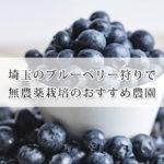 埼玉で無農薬のブルーベリー狩りが出来るおすすめ農園9選!