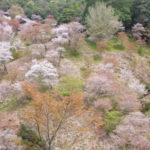 吉野山の桜の所要時間や回り方は?奥千本まで徒歩で行ける?絶景ポイントもご紹介!