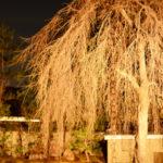 高台寺のライトアップは春夏秋冬で楽しめる!所要時間やアクセスは?プロジェクションマッピングも見ごたえあり!