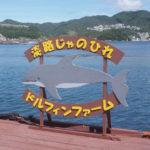 【淡路じゃのひれドルフィンファームでイルカ体験】予約やアクセス方法もご紹介!
